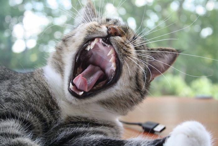 Почему мы зеваем?