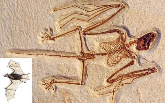 Последние открытия, изменившие представления об эволюции