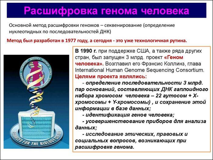 Расшифрован геном «алтайского человека»