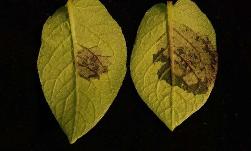 Растения «чуют» вредителей