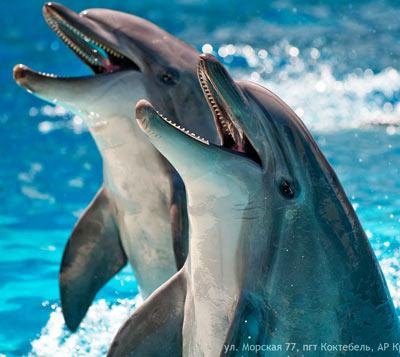 Разговаривают ли дельфины?