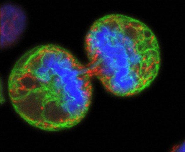 Разрабатывается новый подход к лечению меланомы