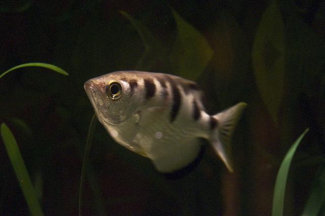 Рыбы узнают нас в лицо