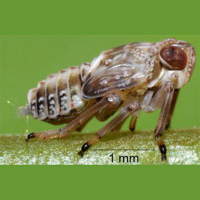 Самая древняя «шестеренка» обнаружена на ногах насекомых