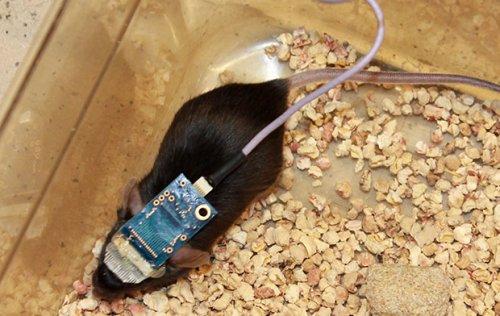 Сеть из нанопроводников позволяет контролировать деятельность мозга на протяжении длительных промежутков времени