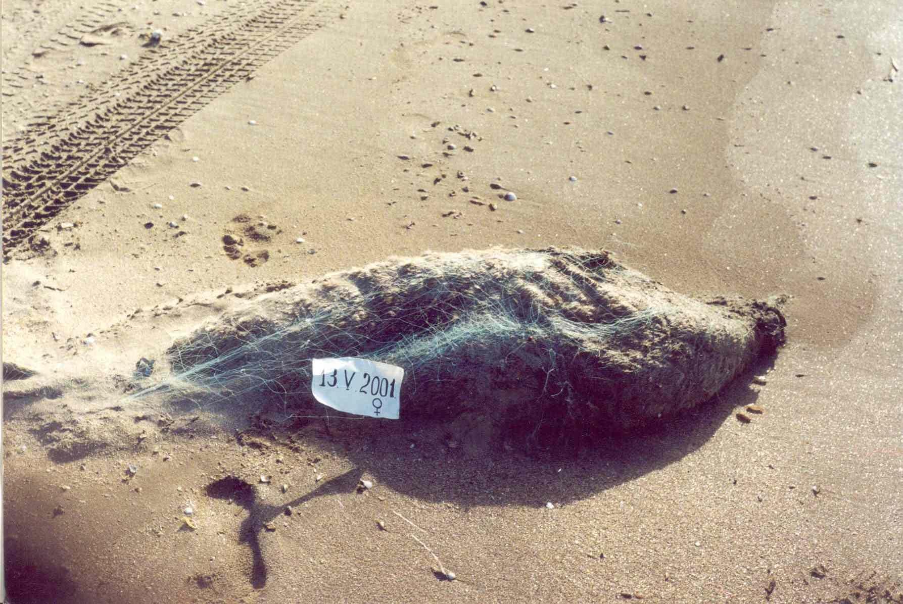 Сети, пули и собачья чума против каспийского тюленя