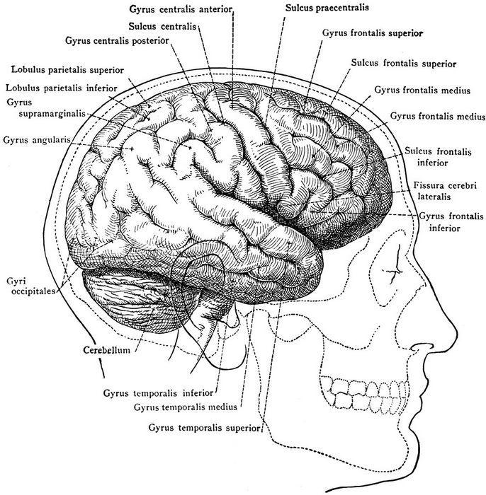 Сколько мегабайт вмещает человеческий мозг?