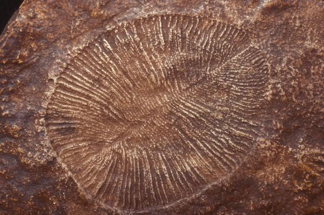 Смена магнитных полюсов перестроила земную жизнь