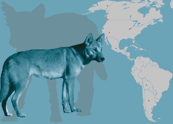 Собаки появились в америке через тысячи лет после людей?