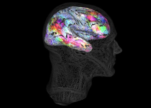 Составлена подробная карта семантического словаря мозга
