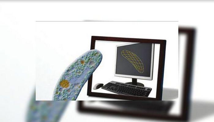 Создана первая компьютерная модель живого организма