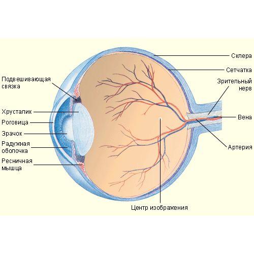 Стволовые клетки помогают возвратить зрение