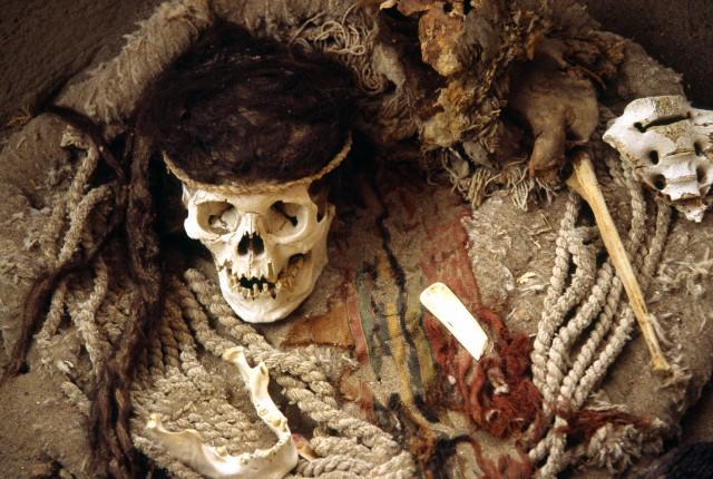 Тюлени заразили древних индейцев туберкулёзом