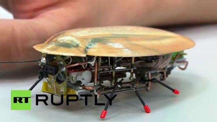 Томские ученые создали искусственный самообучаемый мозг