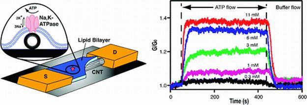 Транзистор из углеродной нанотрубки обеспечит взаимодействие человека и машины