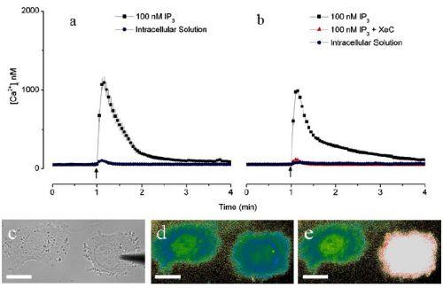 Углеродные нанопипетки и раковые клетки