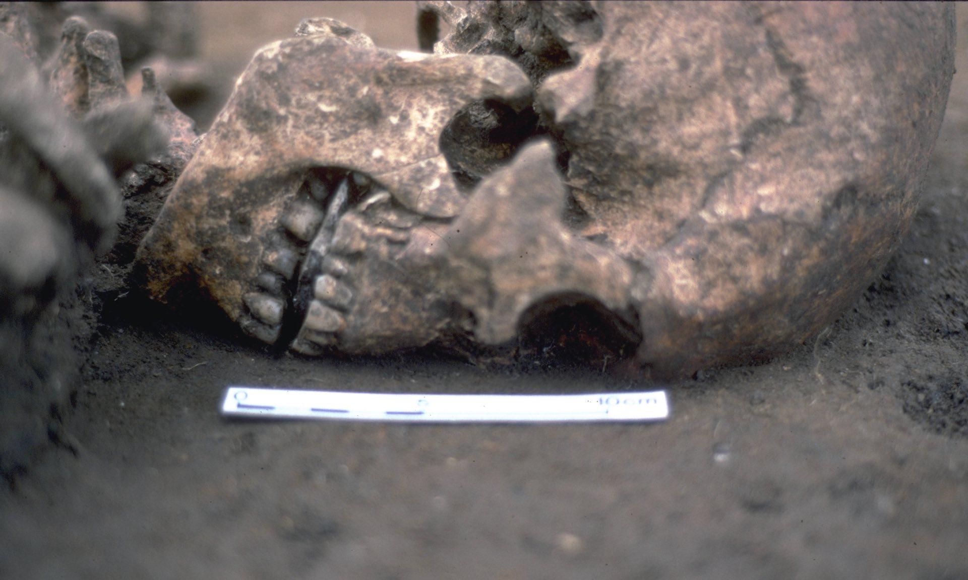 В англии нашли погребение человека без языка