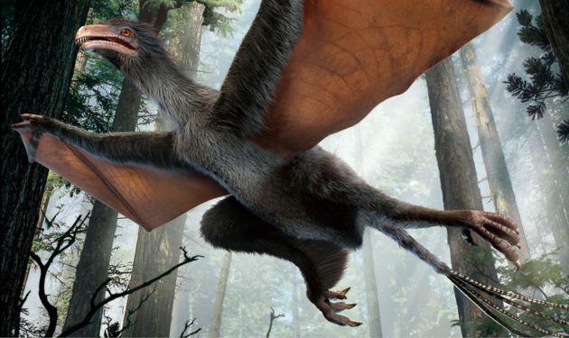 В китае нашли «летучемышиного» динозавра