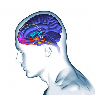 В мозге нашли социальную сеть