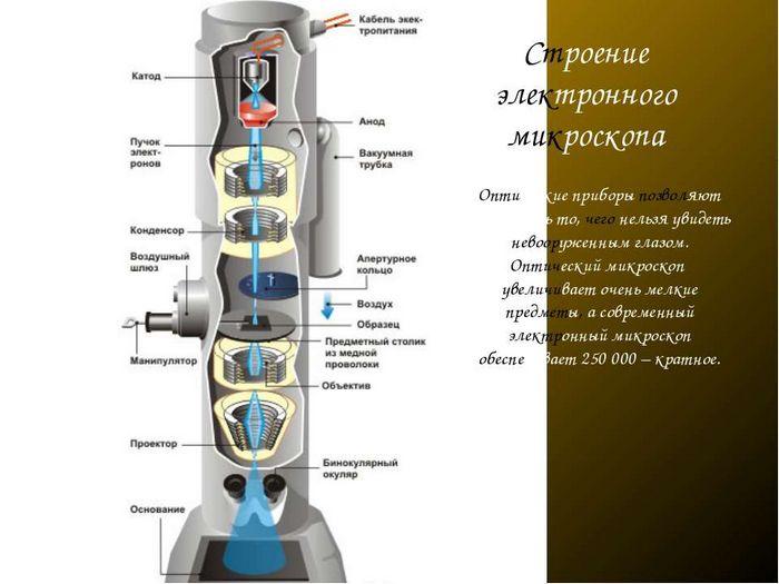 Вирусы в оптическом микроскопе