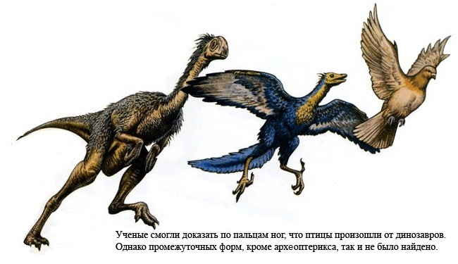 Война среди эволюционистов!