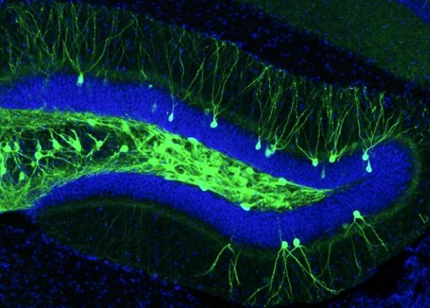 Волокно «три в одном» совместило все стадии оптогенетики