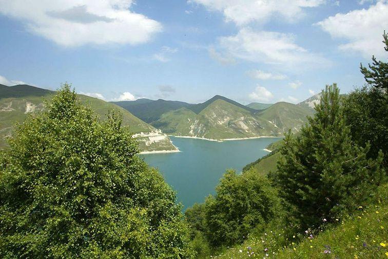 Возрождается гербарий восточного кавказа
