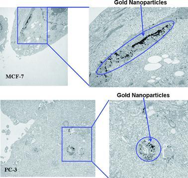 Зеленая нанотехнология с помощью чая: наночастицы золота для борьбы с раком